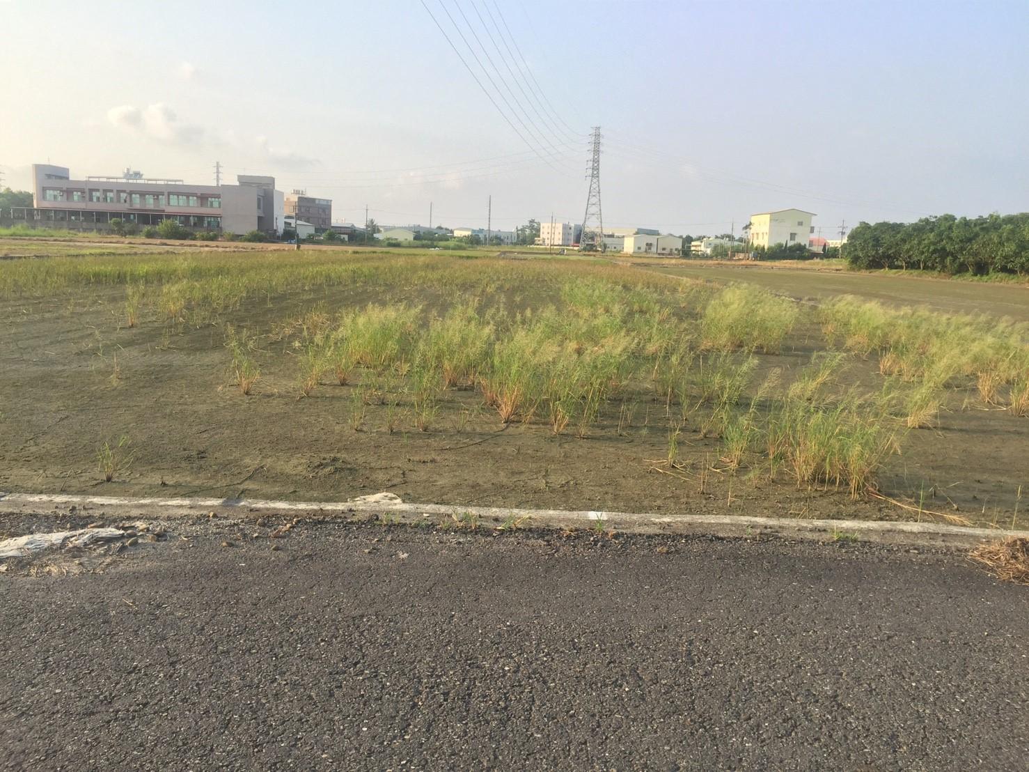 近新市生態3.8分農地