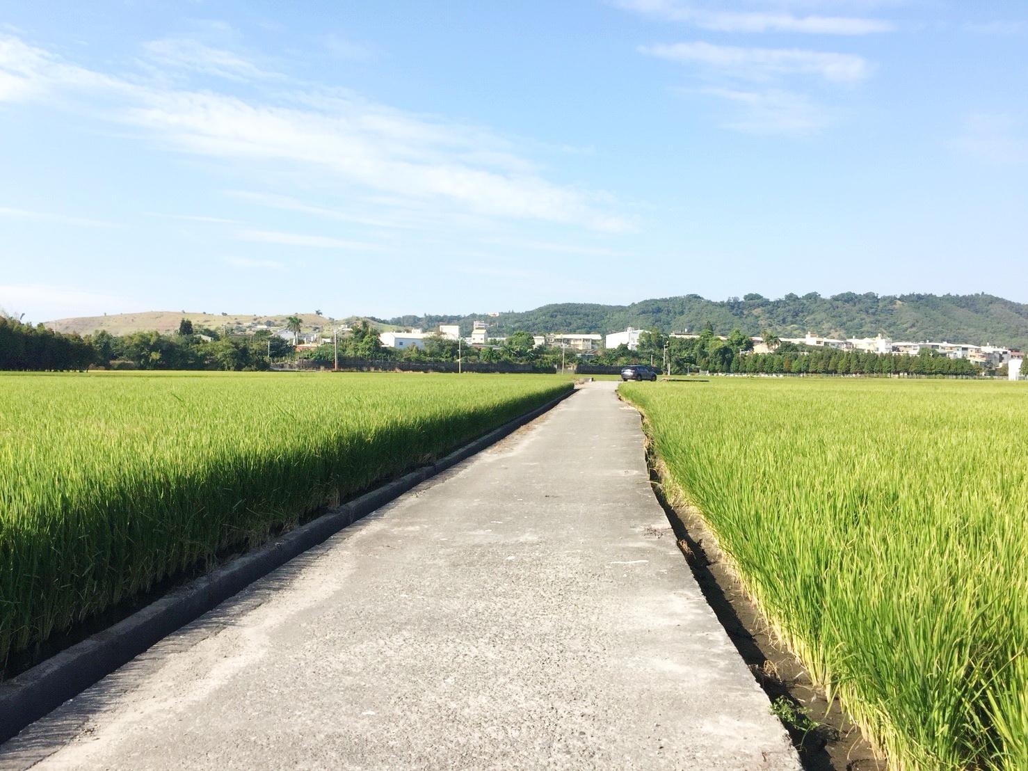 大甲東農地