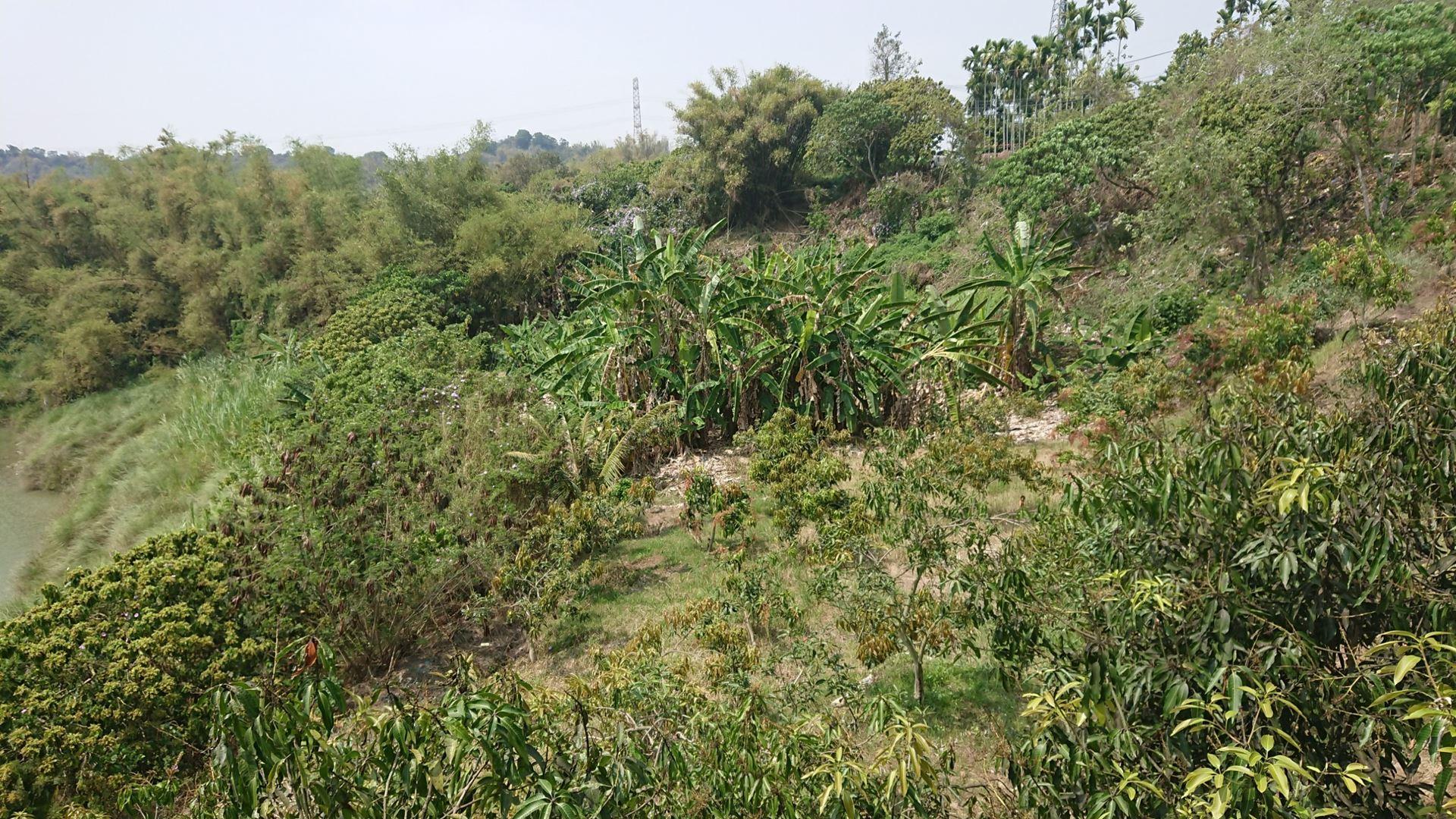 左鎮果農蕉園