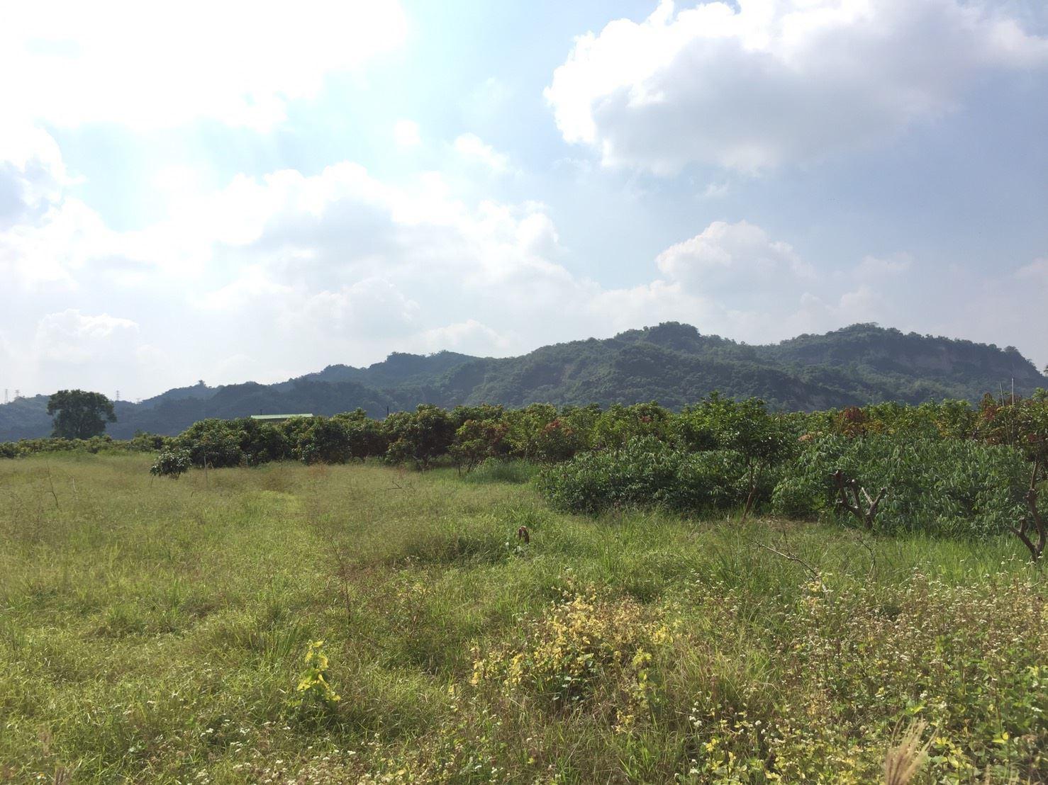 楠西龜丹最便宜平坦2分8農地