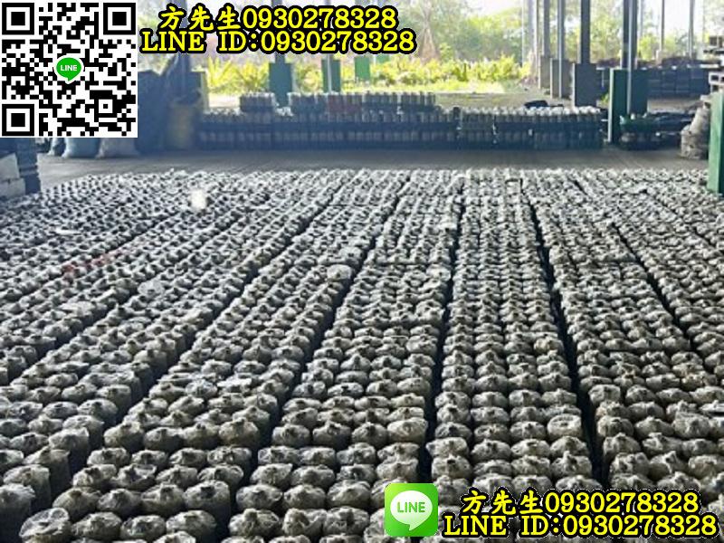 新營菇類培育農場