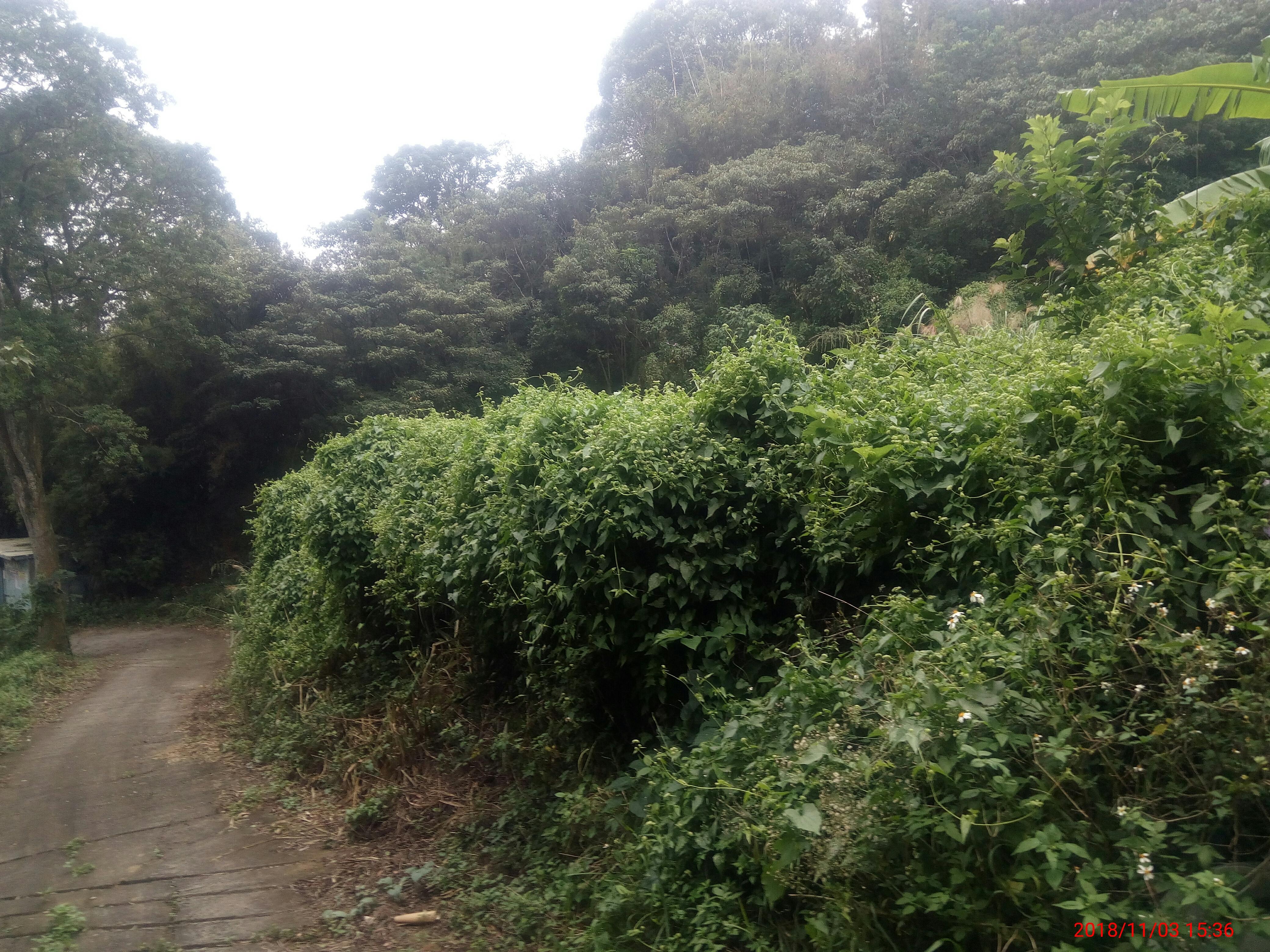 黃梨園【天然美景】農牧地