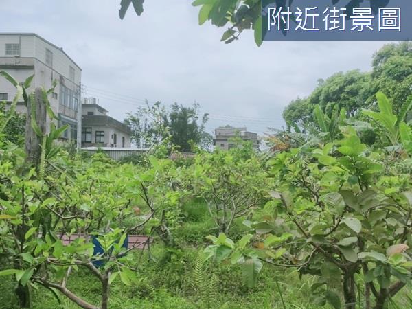(專任)新埔臨路大面寬方正農地(2)