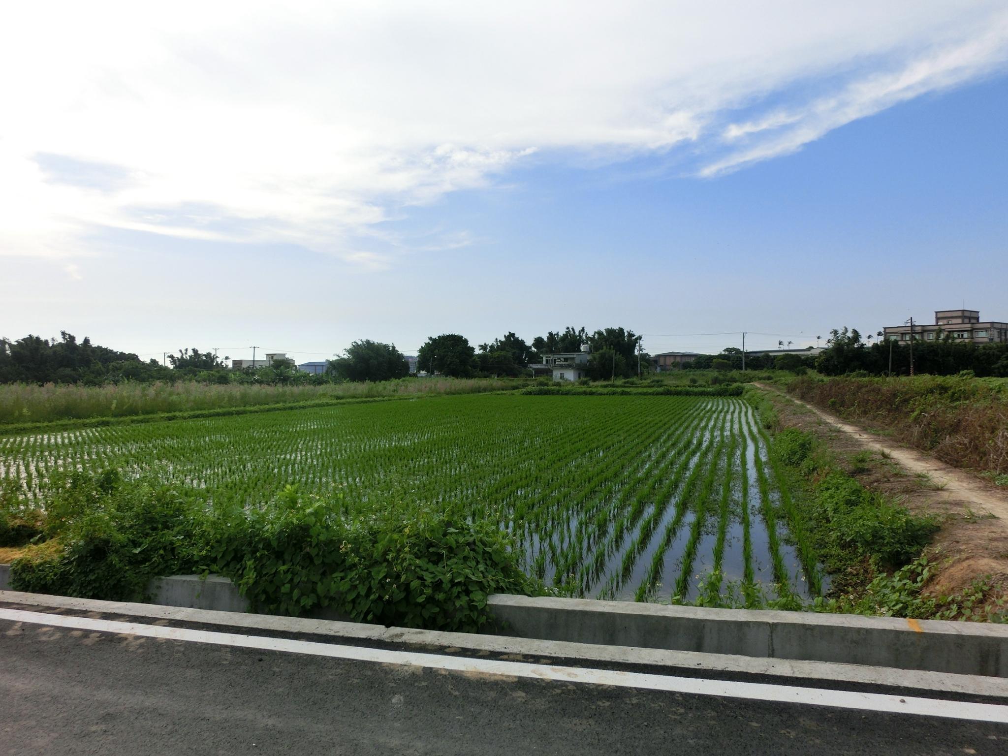 新屋市區【清文路】前後臨路763---農地