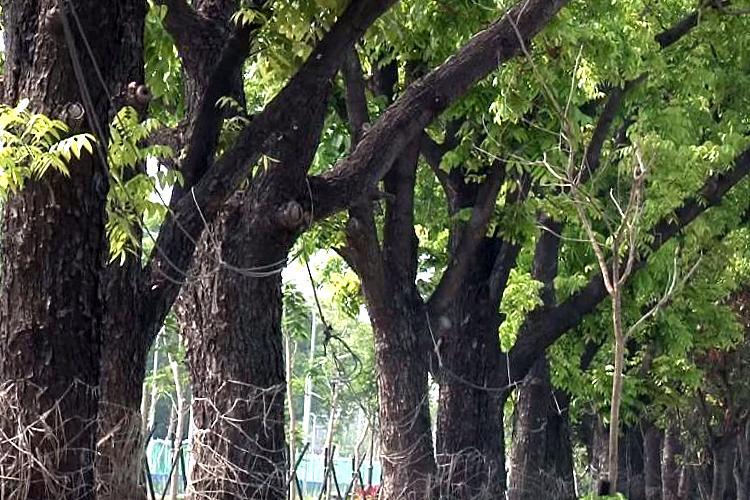圖片:移居台南系列!平實公園等你有空來坐坐