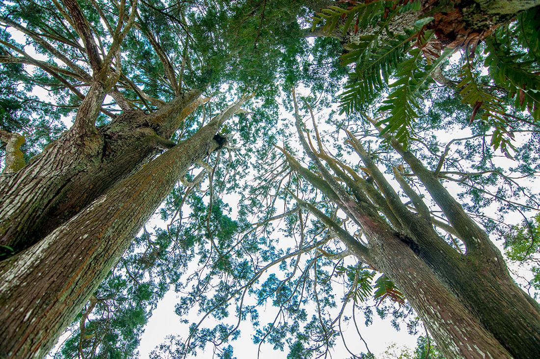 圖片:住在森林裡的家 | 綠色容積 台中宜居建築 綠勢力介入 都市叢林變花園